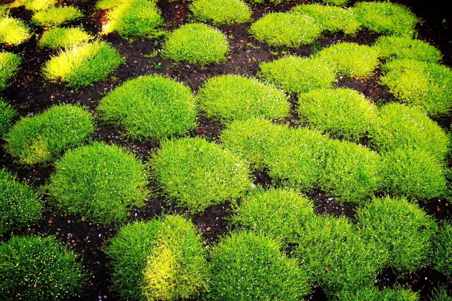 Creative images joy studio design gallery best design for Japanese grass
