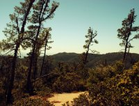 47 above big basin